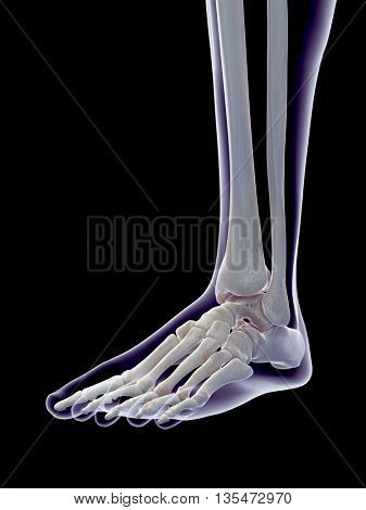 3d rendered, medically accurate 3d illustration of the human foot