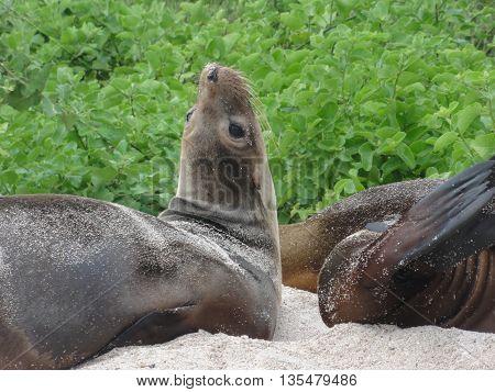 seal, sea lion, baby seal, baby sea lion