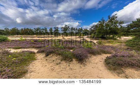Heide Zeegserduinen