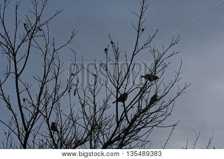 Black silhouette of a tree with four birds sitting on its bare branches against a dark blueish-grey cloudy sky.