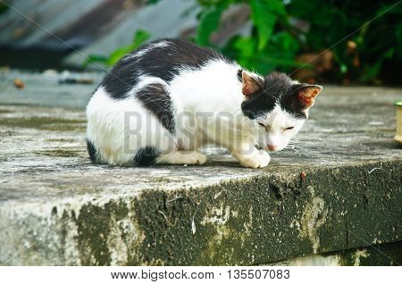 Black-an-white alley cat staring wary at the street.