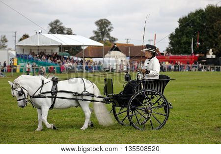NEWBURY, UK - SEPTEMBER 21: Driver and horse follow a predetermined pattern around the arena as part of the gig driving competition at the Berks County show on September 21, 2014 in Newbury