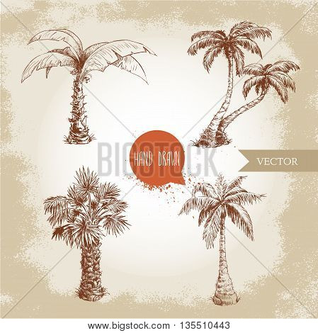Hand drawn coco palm trees sketch set.Vector illustration on vintage grunge background. Travel and vacation symbols.