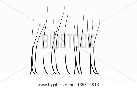 Microscopic Hair Fibers