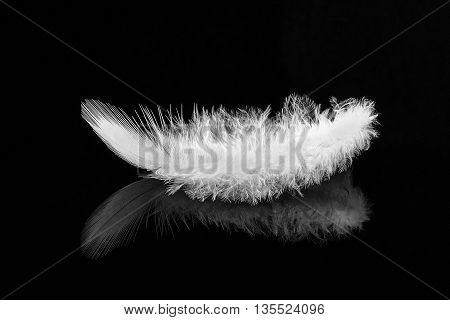 Beautiful single white feather viewed from the side on black reflective background