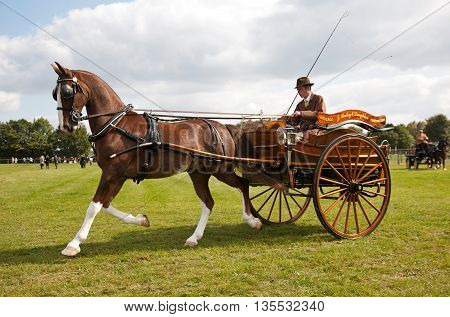 NEWBURY, UK - SEPTEMBER 21: An unnamed competitor in the horse and gig competition displays his rig and driving skills to the judges and public at the Berks show on September 21, 2014 in Newbury
