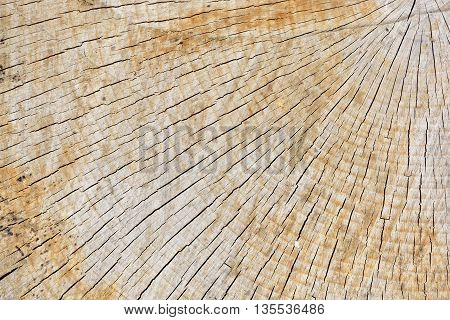 Abstract Background Texture Of Freshly Chainsaw Cut Wood