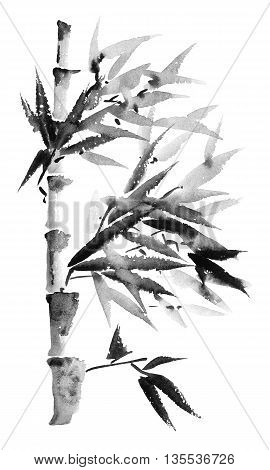 Watercolor and ink illustration of bamboo in style sumi-e u-sin. Oriental traditional painting.