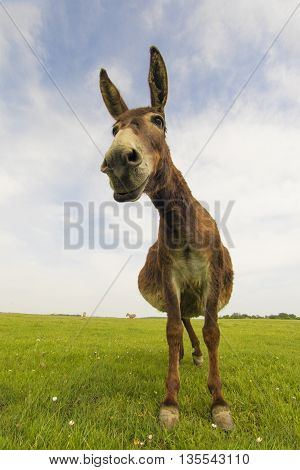 Portrait of funny donkey on the floral meadow