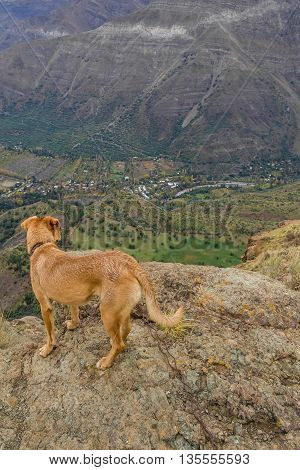 Dog Looking The Valley