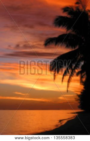 defocused tropical sunset background with plam tree silhouette and orange sky