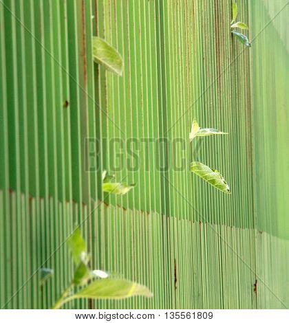 apple leaves peering trough green metal fence looking for sun. narrow dept of field focus