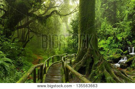 Wooden bridge over the rainforest in Southeast Asia