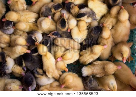 Ducklings at a market in Cao Lanh the capital of Dong Thap Province in Vietnam.