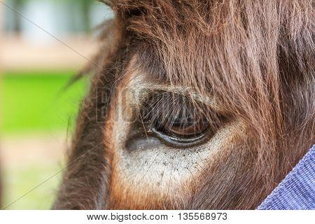 close up of donkey's eye