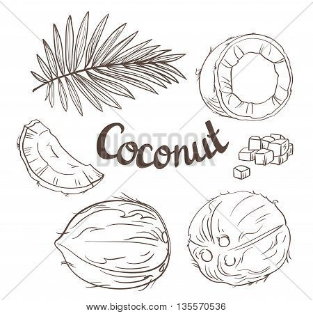 Coconut set - the whole nut leaves a coco segment and pulp of a coco. Vector illustration.