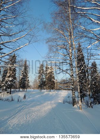 nature landscape winter snowy fores and ski track