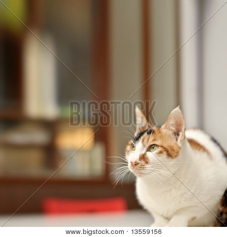 Elegant cat sit on desk in home with copyspace. poster