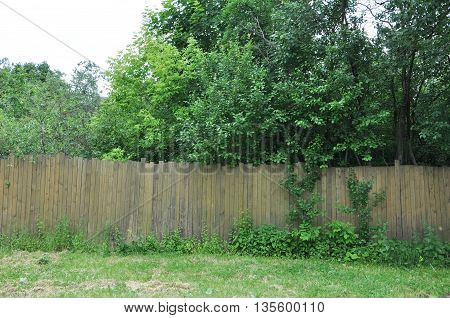 the neglected garden behind the old wooden fence