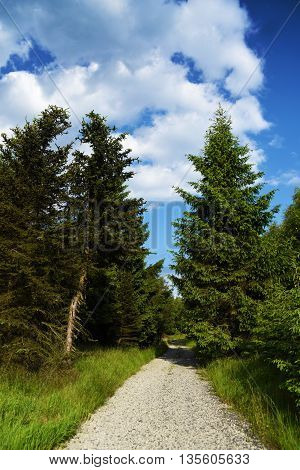 Krusne hory mountains in sunny summer day with path