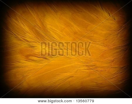 Orange chicken feather background with a soft texture and dark border poster