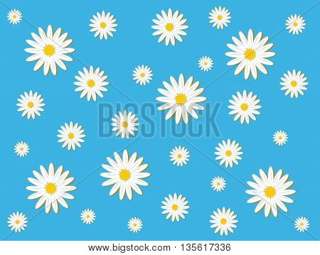 Daisy pattern on the blue background. Nature.