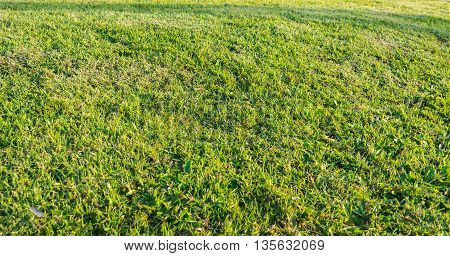 Image Of Grass Field Texture With On Morning Time.