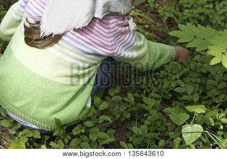 The girl dressed in a green blouse and a bright scarf on her head squatting among the leaves of blueberries and gathering berries.