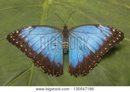 It is image of beautiful tropical butterflies.