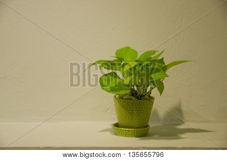 House plant in green pot decoration in home