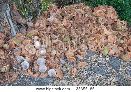 Collection of brown discarded Coconut Husks and shells