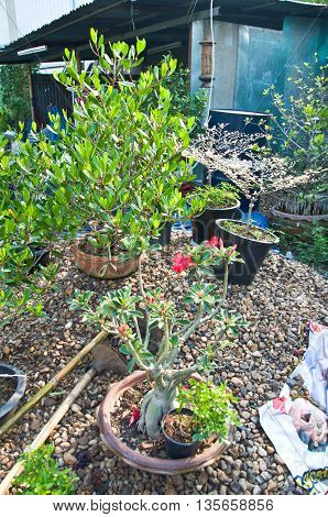 mini garden in home and many tree