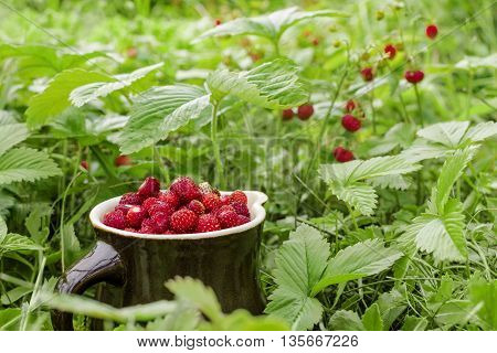 The ripe wild strawberries growing on the grass in the natural environment. Gift of nature in clay jug.