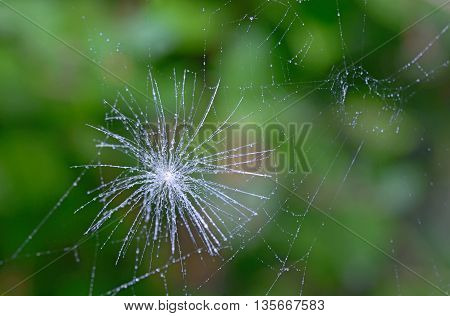 A macro shot of a dandelion parachute and spider web
