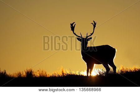 Deer background Wallpaper  wild Mammal Quadruped The Amazing