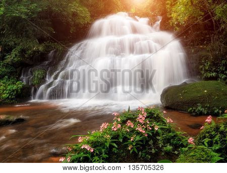 Waterfall in the deep forest at Phetchaboon Province Thailand. Water fall landscape concept. Pink flower (Antirrhinum majus) only found at deep forest waterfall.