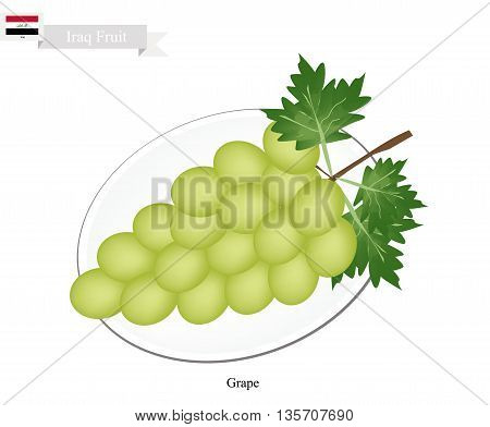 Iraq Fruit Ripe and Sweet Grape. One of The Most Popular Fruits of Iraq.