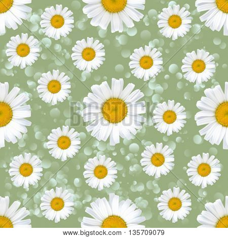 Daisy flowers seamless pattern on abstrakt background