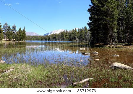 Water in Yosemite National Park with trees and mountains in the background