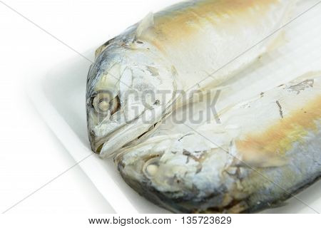 Close up of frozen mackerel fish in foam container isolated white background