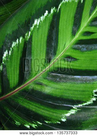 Close up of green lamina