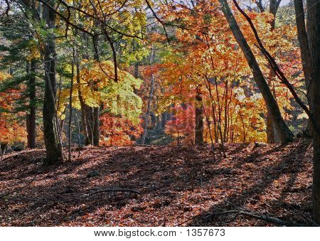 Autumn In Far-Eastern Taiga