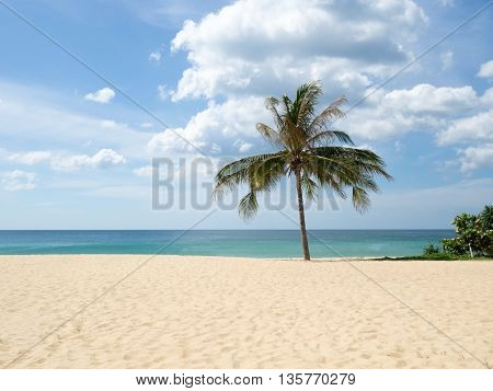 Summer time on beach. Green coconut tree on a white sand beach at sea Kata beach Phuket Thailand.