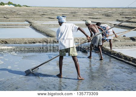 Pondicherry, Tamil Nadu, India - July 05 2014. Poor workers picking up, collecting the sald, in big field, manual labour, organic agriculture, very hard job