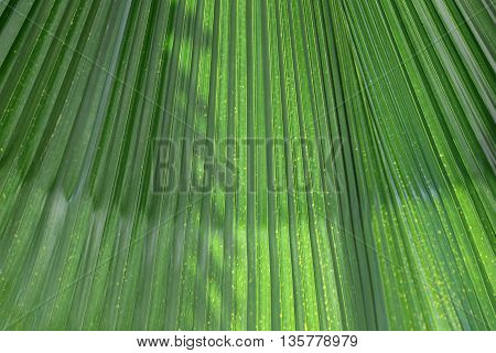 Green leaves with bright sunshine in the morning the design concept for the background naturally.
