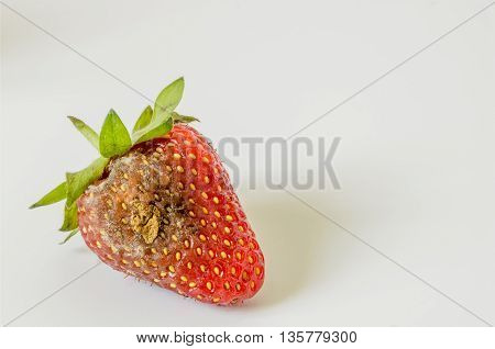 rotten strawberry with mildew on white background.