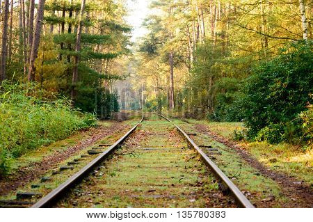 Old mossy railroad tracks curved and extending into the distance in dense hardwood forest with fallen leaves covering surface during autumn