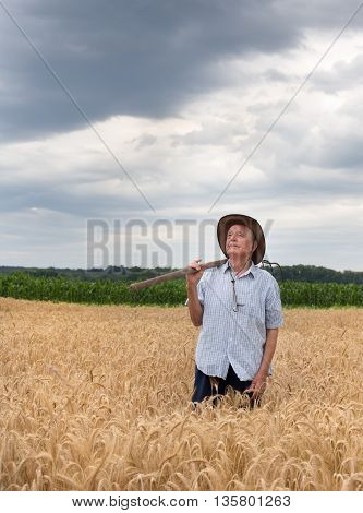 Senior Peasant In Golden Barley Field