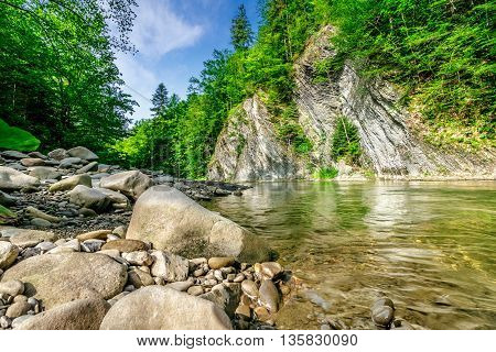 Shore Of Forest River
