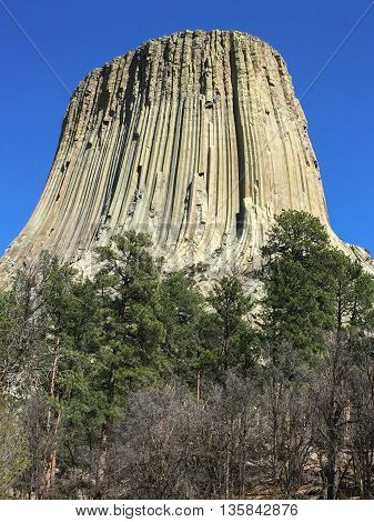 Trees and scrub hide the base of Devil's Tower.